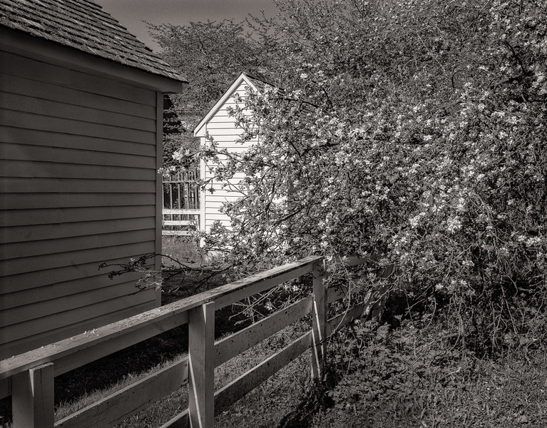Outbuilding & Apple Blossoms