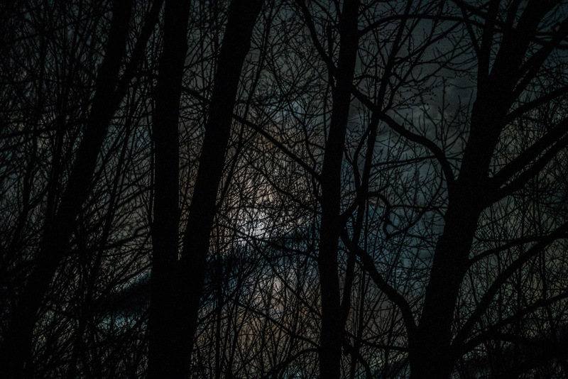 Moonlight Through Trees with Backslash Cloud, Williamstown, MA,