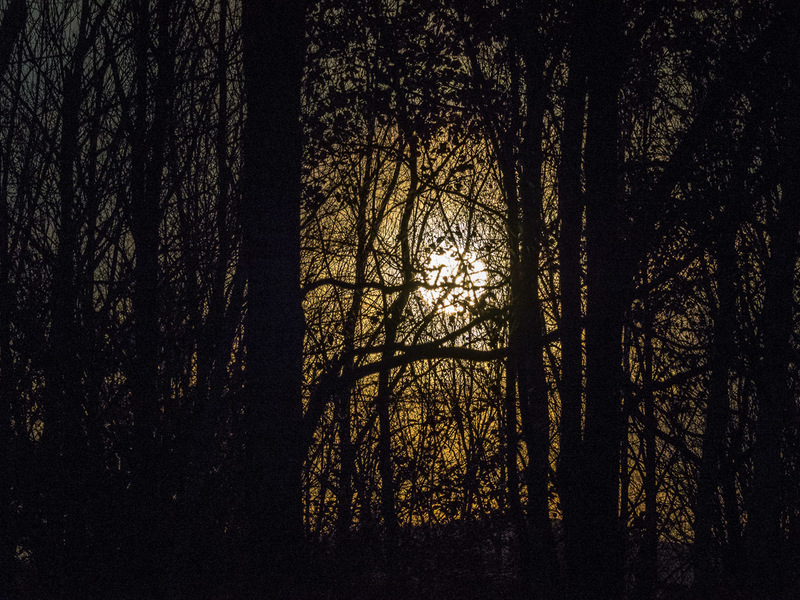 Moonlight through Silhouetted Woods